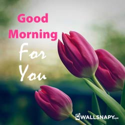 2019-free-good-morning-profile-pictures