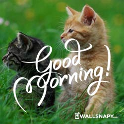 HD-good-morning-images-for-whatsapp-free-download