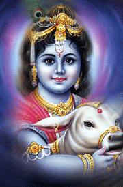 beautiful-bala-krishnar-cow-hd-wallpaper