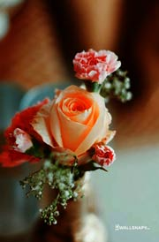 beautiful-pictures-roses-mobile