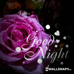 best-good-night-whatsapp-hd-images-download