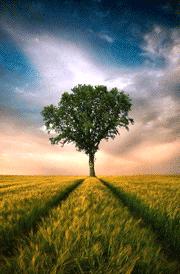 blue-sky-single-tree-hd-wallpaper