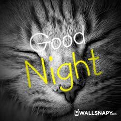 cute-good-night-dp-images-download