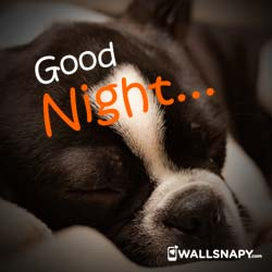 cute-good-night-status-images-download