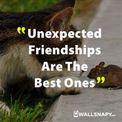 Best Whatsapp Dp And Status Hd Pic With Friendship Quotes
