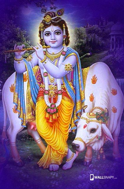god krishna with cow hd wallpapers 9815324