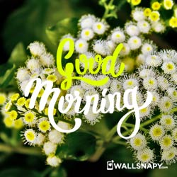 good-morning-images-nature-for-whatsapp