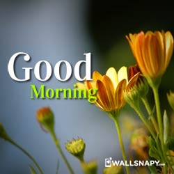 2019 Good Morning Hd Image Quotes For Whatapp Dp And Status 100