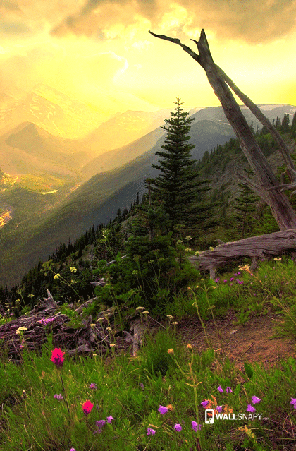 Green Mountain Scenery Hd Wallpaper