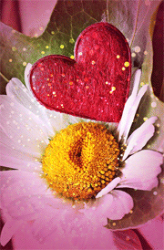 heart-with-flower-hd-wallpaper