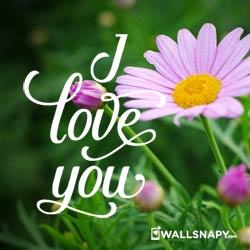 i-love-you-with-flower-images