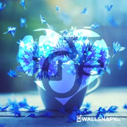 love-images-download-for-whatsapp-dp