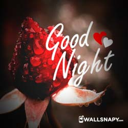 love-rose-good-night-dp-images