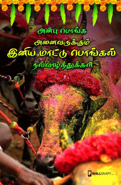 Mattu pongal greetings for tamil primium mobile wallpapers mattu pongal greetings for tamil m4hsunfo