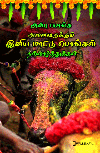 Mattu pongal greetings for tamil primium mobile wallpapers mattu pongal greetings for tamil m4hsunfo Image collections