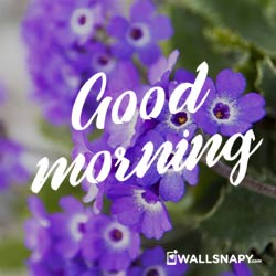 most-beautiful-flowers-whatsapp-good-morning-images