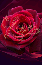 rose-background-love-images