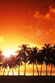 sun-set-with-coconut-tree-hd-wallpaper
