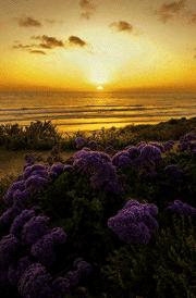 sunrise-purple-flower-hd-nature-wallpaper