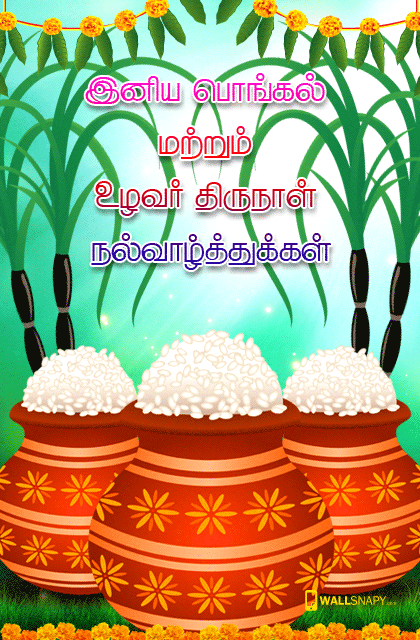 Tamil mattu pongal hd images mobile primium mobile wallpapers tamil mattu pongal hd images mobile m4hsunfo Gallery